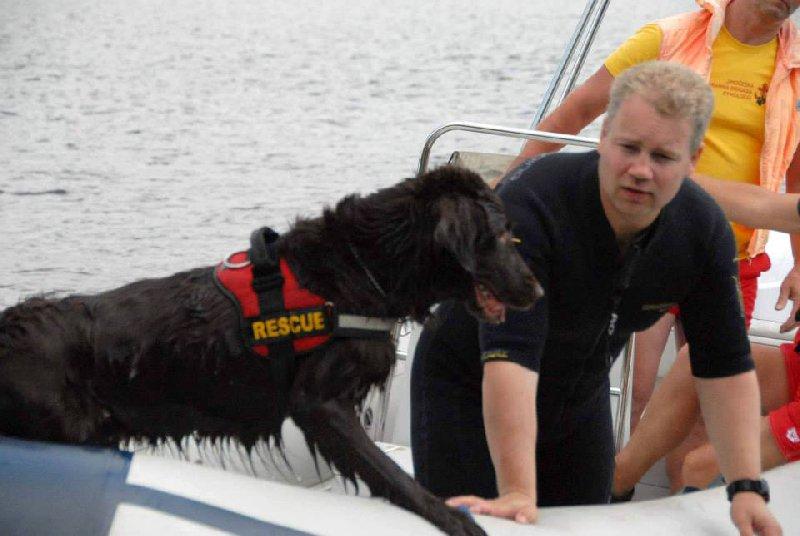 Je krásné sledovat, jak zkušený pes umí při práci přemýšlet…