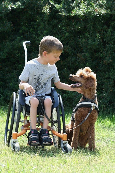 Co vše stojí za výcvikem asistenčního psa?