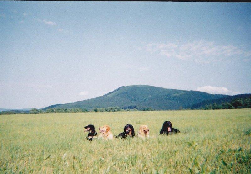 Fotografie hovawartů mám od dětství!