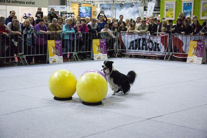 Přijďte se podívat na veletrh FOR PETS, nebudete litovat!