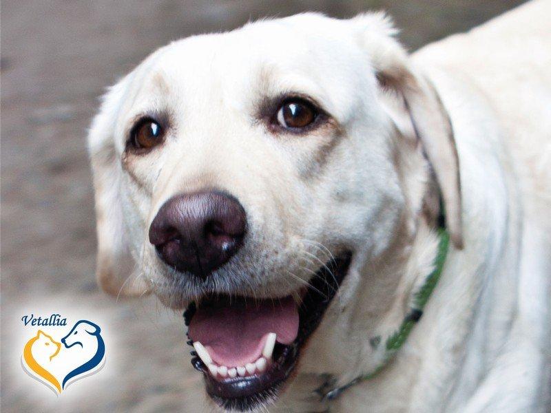 Degenerativní myelopatie – opomíjená příčina ochrnutí starších psů