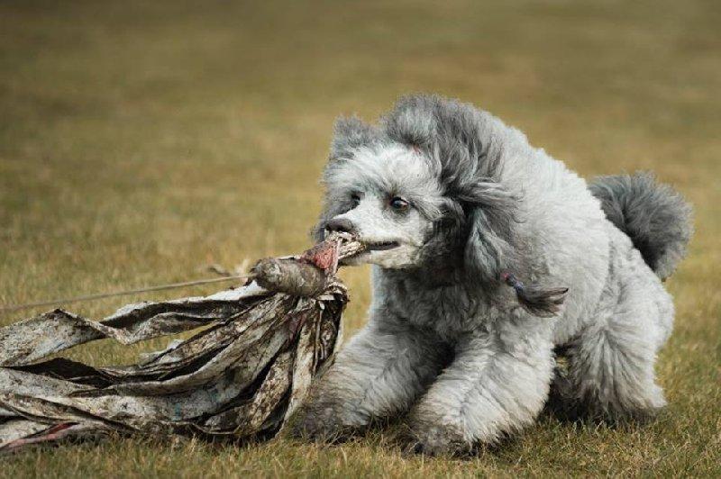 Šťastný pes je pro mě víc než pes s dokonalými chlupy!