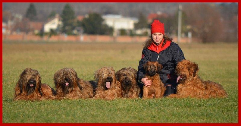 12873516335 Je pro mě ctí žít s takovými psy!