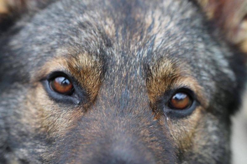 Veterinární poradna – Jak vypadá pes po kastraci?