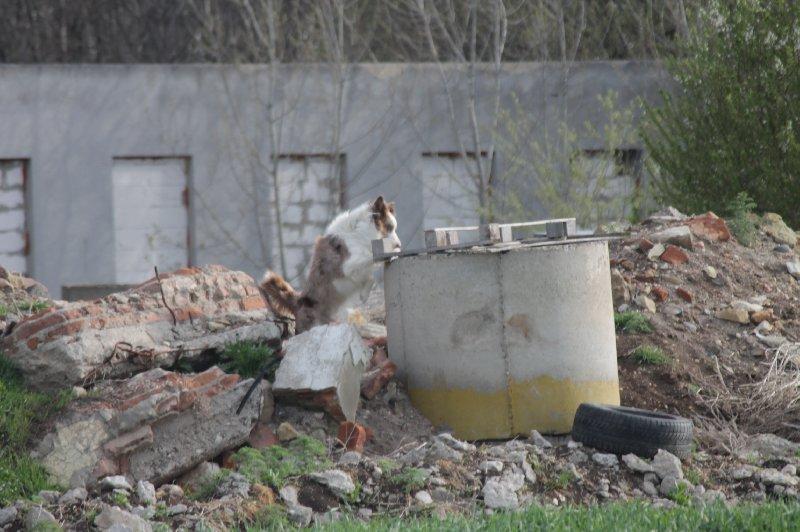 Záchranného psa ani úmorné vedro nezastaví…