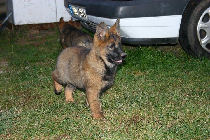 Pes, autonehoda a poskytnutí první pomoci