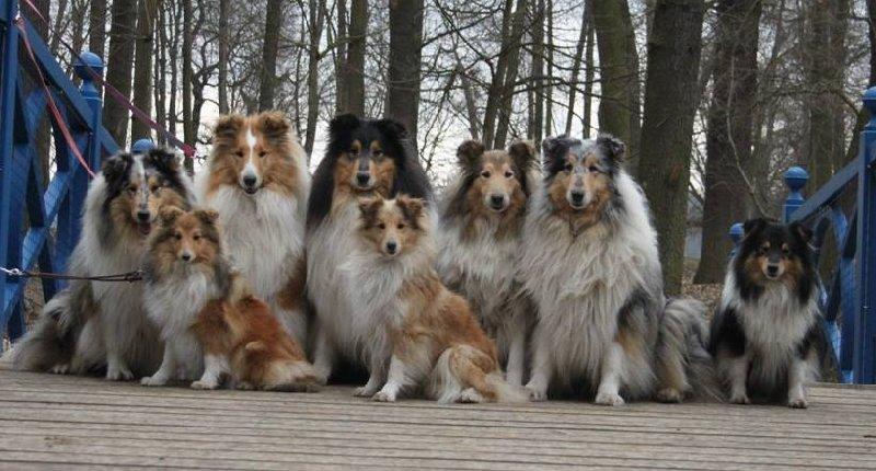 Lassie je už dávno zpátky!