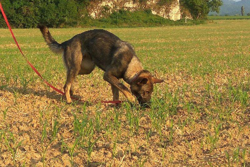 Stopařská poradna – Pomoc, můj pes na stopě zrychluje!