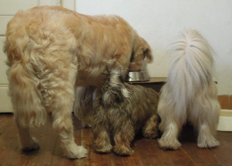 Když pes stárne…
