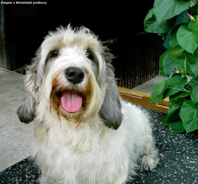 Široké srdce, do kterého se mu vejdou všichni lidé i všichni psi!