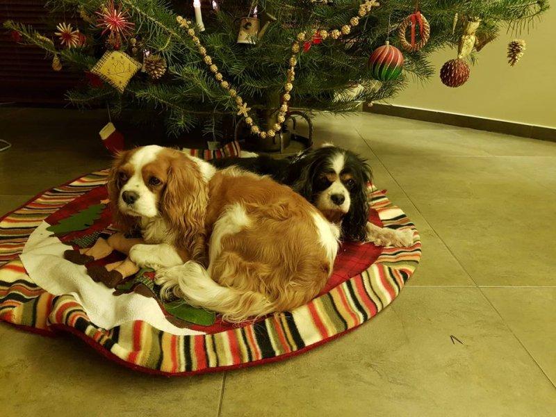 Aby Vánoce nebyly spíš noční můrou…