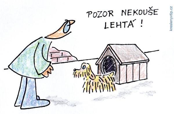 Pes pro lechtivé páníčky
