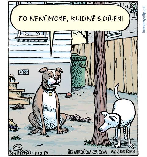 I psi sdílej