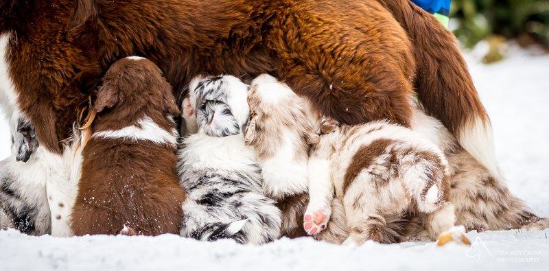 Čím vším může šokovat zájemce o štěně … aneb Má se chovatel smát nebo spíš plakat? 6. díl