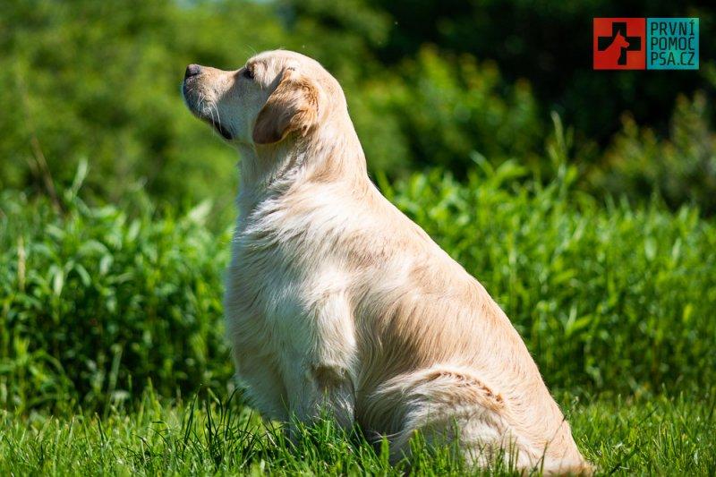 Domácí psí fitness aneb Důležité cviky před nástupem balančního cvičení!