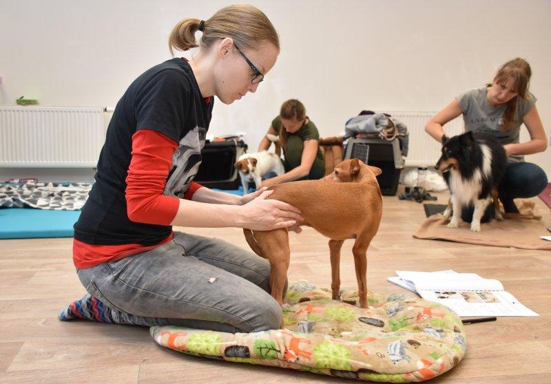 Seznamte se s Institutem zdraví zvířat!