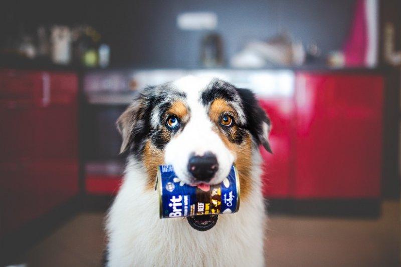 Konzervy Brit Premium by Nature: Masové paté pro všechny psí mlsaly