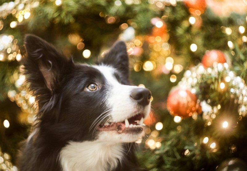 Krásný advent všem!