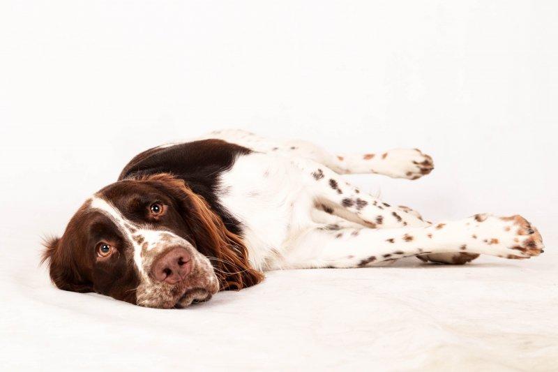 Separační úzkost u psa: jak ji poznat a co (ne)dělat! I. díl