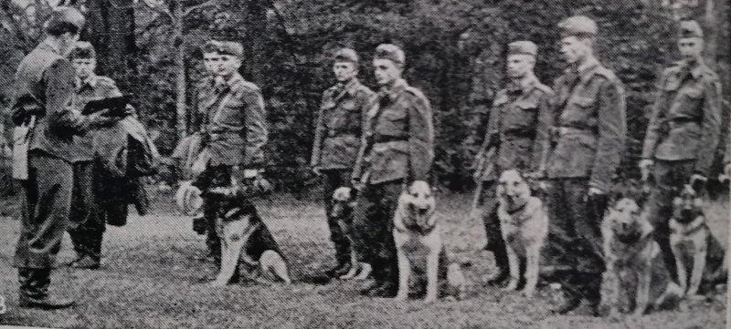 Historie psích sportů – I. díl