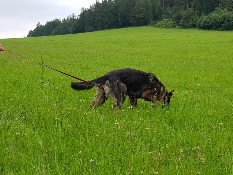 Stopařská poradna – Můj pes je příliš zbrklý!