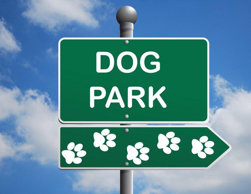 Lesk a bída psích parků aneb Co nám mohou přinést a na co si dát pozor?