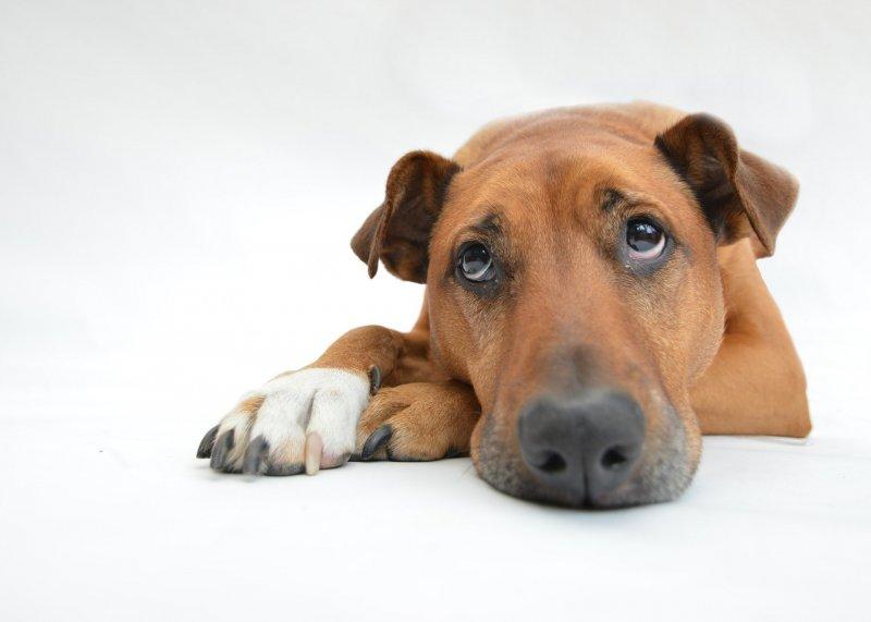 Do databáze ztracených psů zatím lidé vložili údaje o téměř 500 psech