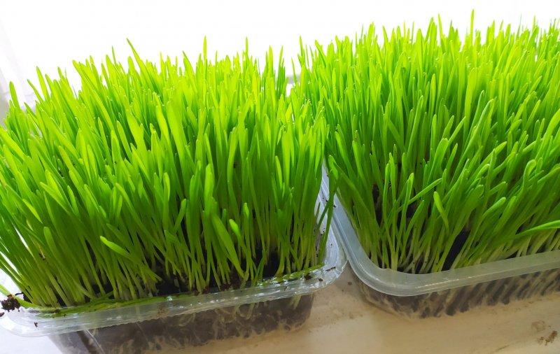 Jak si vypěstovat BIO zeleninu uprostřed zimy?