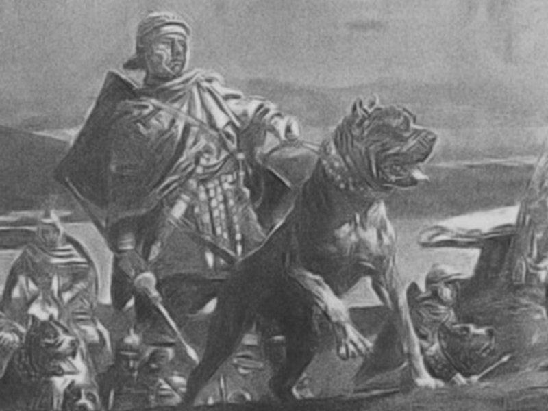 Pohled do historie chovu cane corso