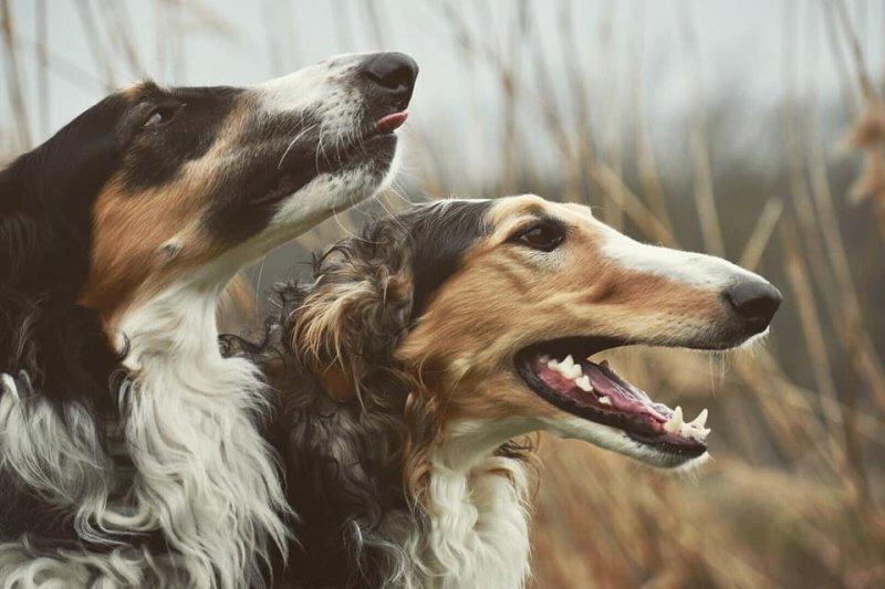 Nejdůležitější věc, která vám zajistí pohádkové soužití se psem!