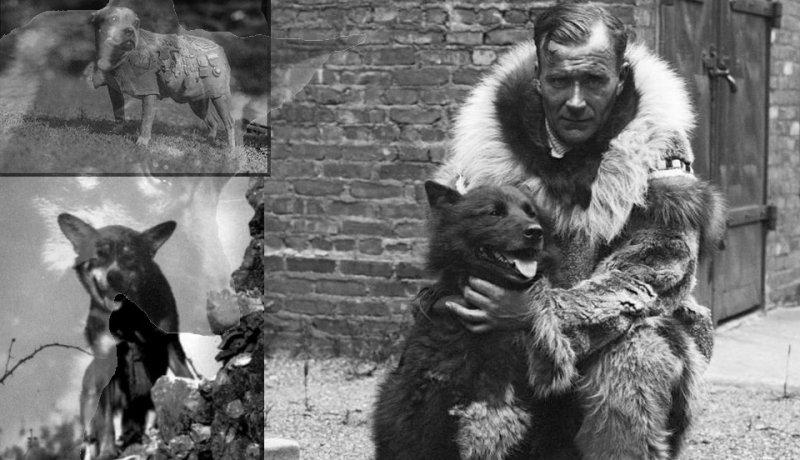 Hrdinové všude mezi námi - aneb příběh o věrnosti a oddanosti - Greyfriars Bobby