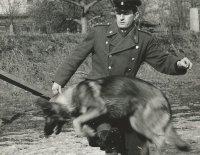 Život se psy a kolem nich mě obohatil!