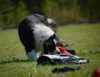 Nosework – zábava i sport pro všechny