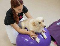 Fyzioterapie malých zvířat