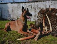 Čeští psi v Kongu