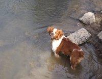Postup výcviku poľovného psa