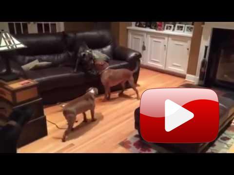Co kdyby patřil obývák psům?
