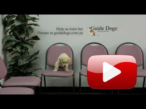 Sledujte skutečné lidi, s nimiž je veden pohovor o práci vodícího psa.