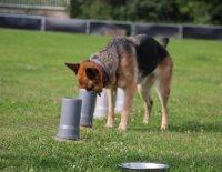 Pilířem je vlastní motivace psa