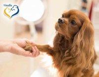 Domácí preventivní péče aneb Co můžeme pro svého mazlíčka udělat sami? 3.díl