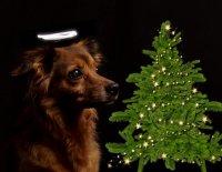 Vánoce podle reklamy