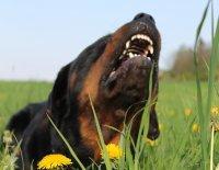 Bože, pomoc! Můj pes asi brzy zešílí!