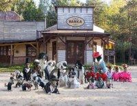 Staň se čtyřnohým hercem, aneb Jak se tvoří psí film