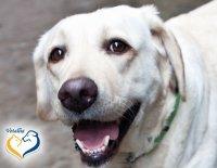 Ilustrační fotografie k článku Degenerativní myelopatie – opomíjená příčina ochrnutí starších psů