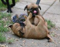 Čím vším může šokovat zájemce o štěně … aneb Má se chovatel smát nebo spíš plakat? 2.díl