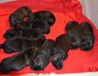 Organizace a řízení chovu psů 1. díl