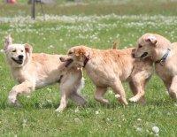 Čím vším může šokovat zájemce o štěně … aneb Má se chovatel smát nebo spíš plakat? 3.díl