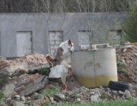 Ilustrační fotografie k článku Záchranného psa ani úmorné vedro nezastaví…