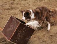 Testujeme za vás... aneb Výukový program ATA – Trenér psů I. stupeň ZAZVONIL ZVONEC A...