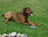 Veterinární poradna - Proč se mému psovi třepí drápy?
